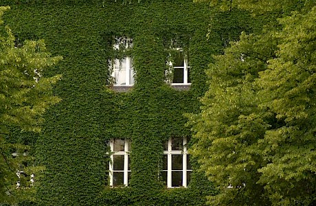 Fassadenbegrünung – hängende Gärten inmitten der Stadt