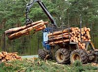 In Südtiroler Wäldern wachsen jede Stunde nahezu 100 Festmeter Holz nach - für ein Einfamilienhaus, das in der üblichen Holzbauweise errichtet wird, benötigt man ca. 70 m³ Holz. Leider werden zurzeit rund 80% des im Bausektor verwendeten Holzes importiert, während der Wald in Südtirol veraltet. Es gibt allerdings Unternehmen in Südtirol, die dies erkannt haben und bereits interessante Projekte in diesem engen Kreislauf und zeitgemäßer Architektur verwirklichen.